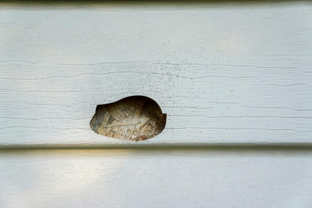 Evidence of winter siding damage 1030x687